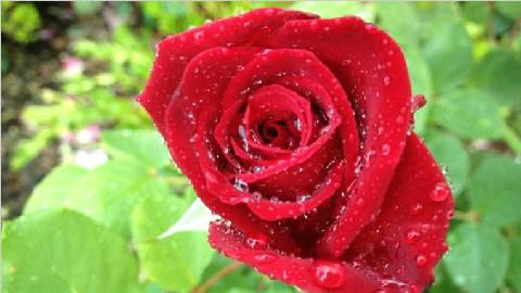 新诗奖季军:《八月有雨》