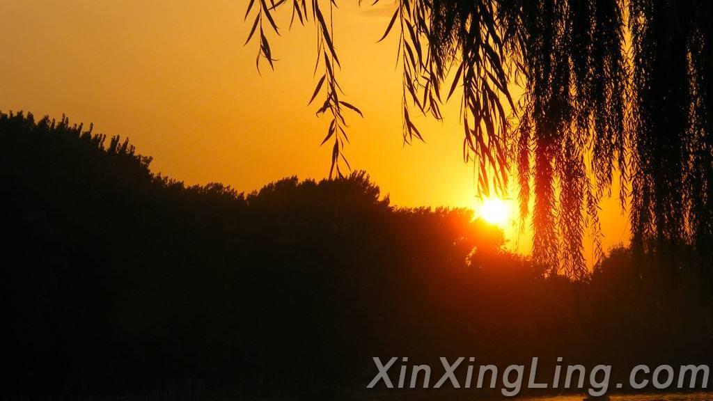 闲寂、淡然的乡村生活图景——评唐本靖的《乡村初夏》